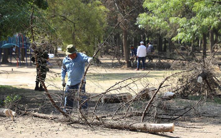 Emprenden retirode árboles con plagaen Parque Naucalli